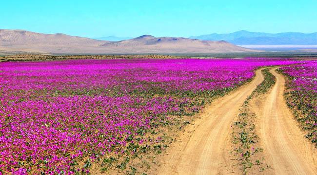 Deserto Florido Chile
